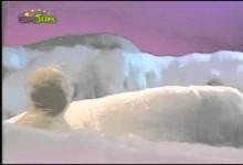 Tuleni z iglu: Slunecni bryle