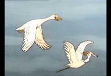 Tao Tao: Velke stehovani ptaku
