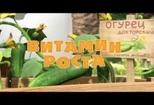 Masa a medved: Vitamin pro rust