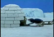 Pingu: Stavba iglu